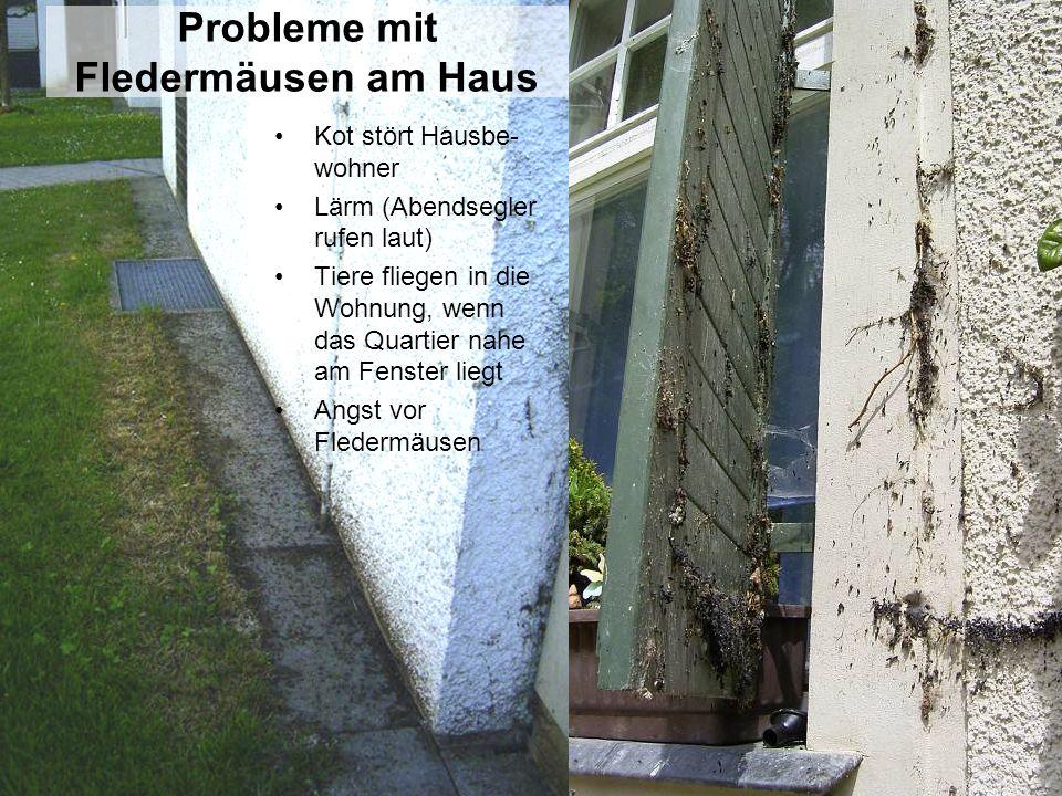 Probleme mit Fledermäusen am Haus Kot stört Hausbe- wohner Lärm (Abendsegler rufen laut) Tiere fliegen in die Wohnung, wenn das Quartier nahe am Fenst