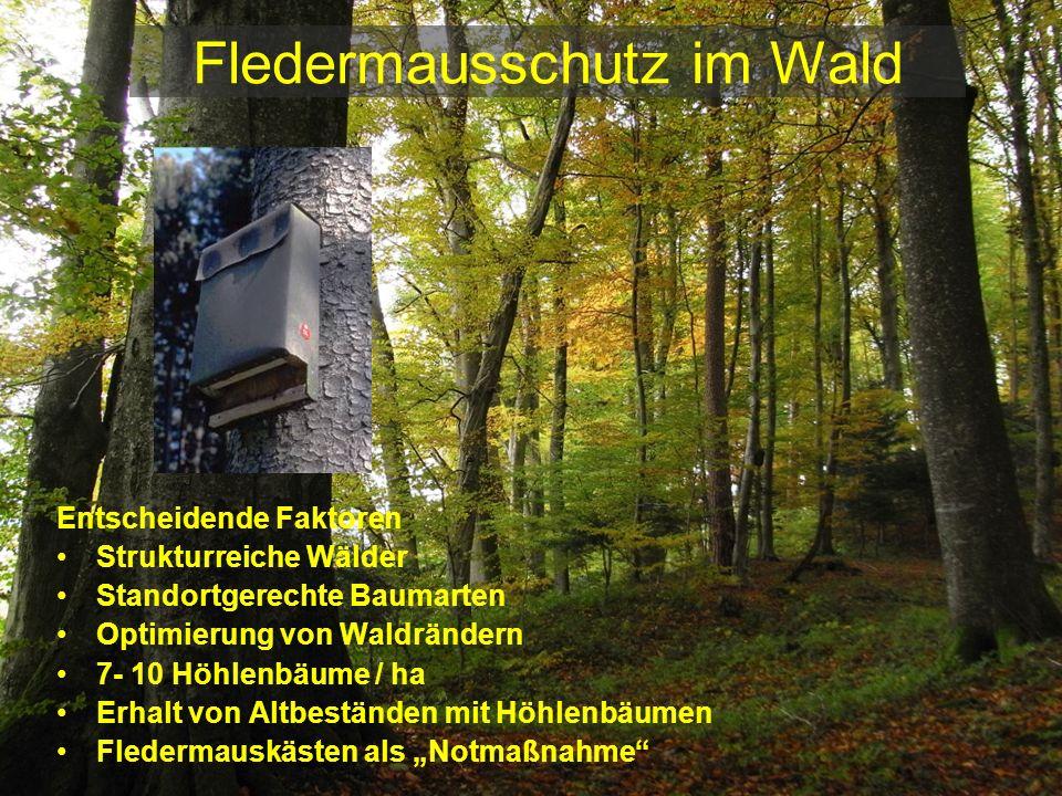 Fledermausschutz im Wald Entscheidende Faktoren Strukturreiche Wälder Standortgerechte Baumarten Optimierung von Waldrändern 7- 10 Höhlenbäume / ha Er
