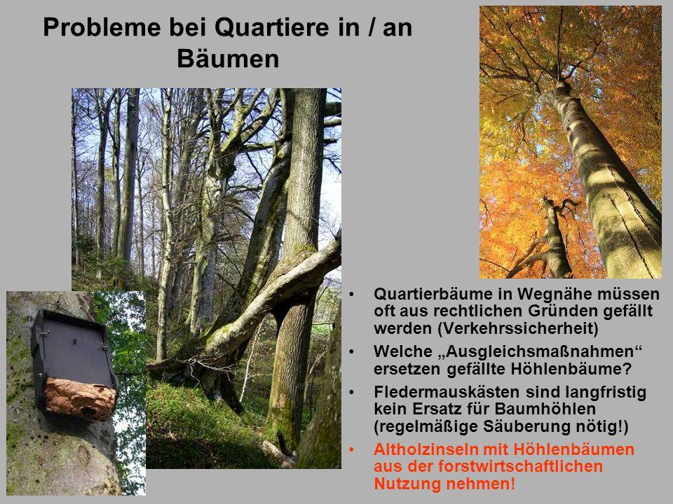 Probleme bei Quartiere in / an Bäumen Quartierbäume in Wegnähe müssen oft aus rechtlichen Gründen gefällt werden (Verkehrssicherheit) Welche Ausgleich