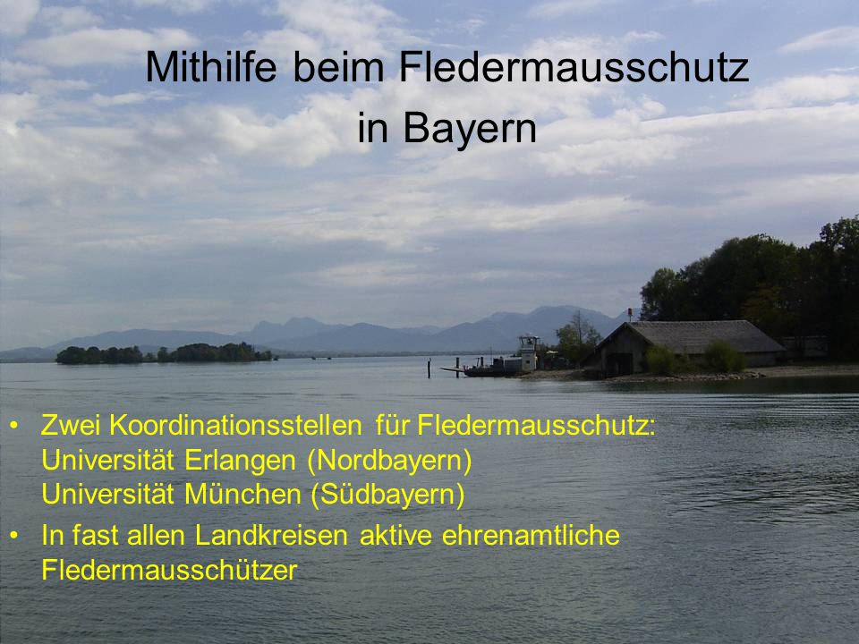 Mithilfe beim Fledermausschutz in Bayern Zwei Koordinationsstellen für Fledermausschutz: Universität Erlangen (Nordbayern) Universität München (Südbay