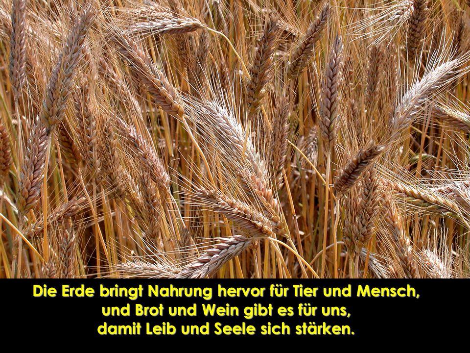 Die Erde bringt Nahrung hervor für Tier und Mensch, und Brot und Wein gibt es für uns, damit Leib und Seele sich stärken.