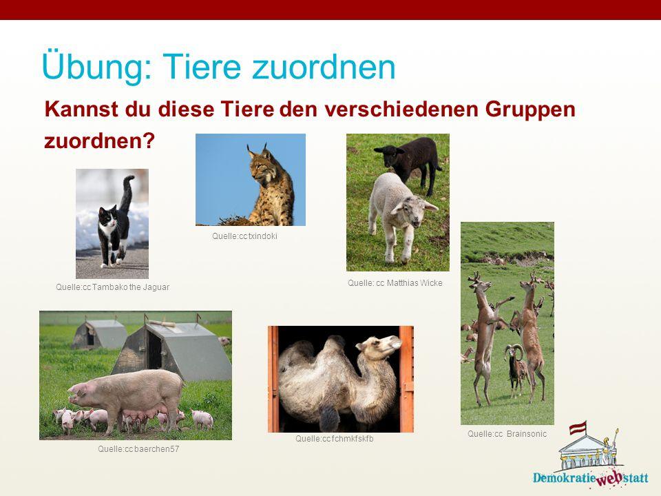 Übung: Tiere zuordnen Kannst du diese Tiere den verschiedenen Gruppen zuordnen.