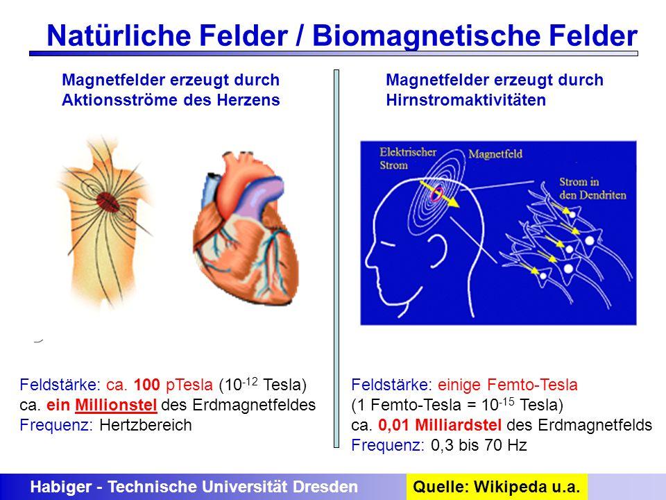 Habiger - Technische Universität Dresden Natürliche Felder / Biomagnetische Felder Quelle: Wikipeda u.a. Magnetfelder erzeugt durch Aktionsströme des