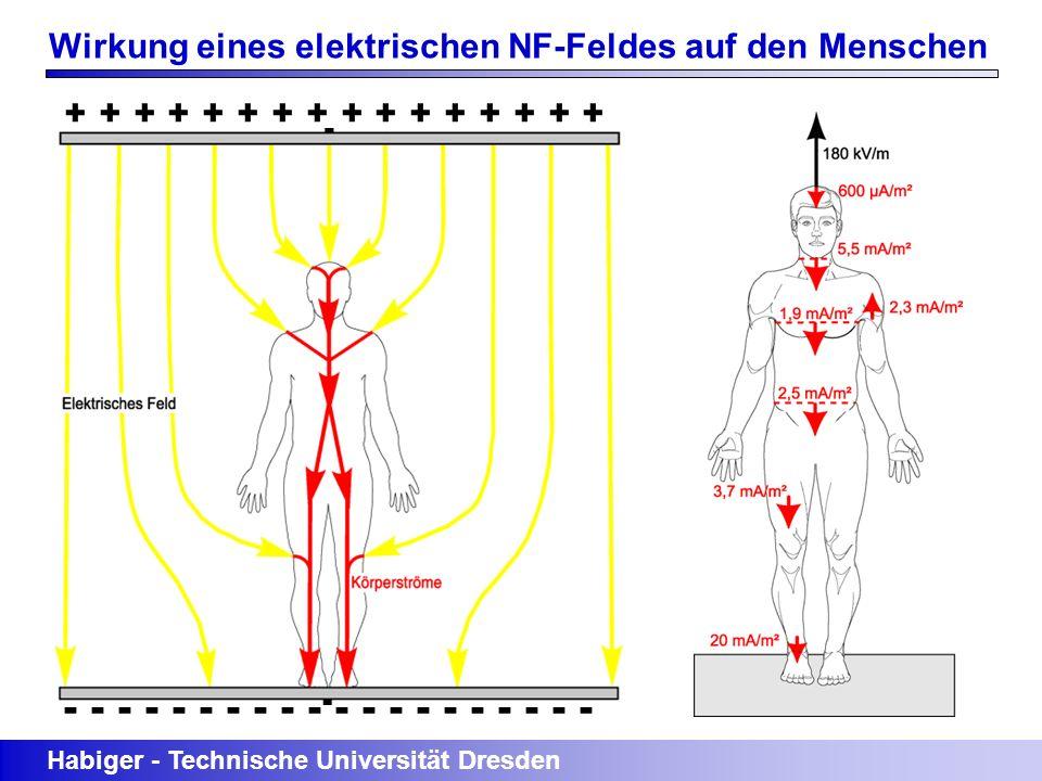 Habiger - Technische Universität Dresden + + + + + + + + - - - - - - - - - - Wirkung eines elektrischen NF-Feldes auf den Menschen