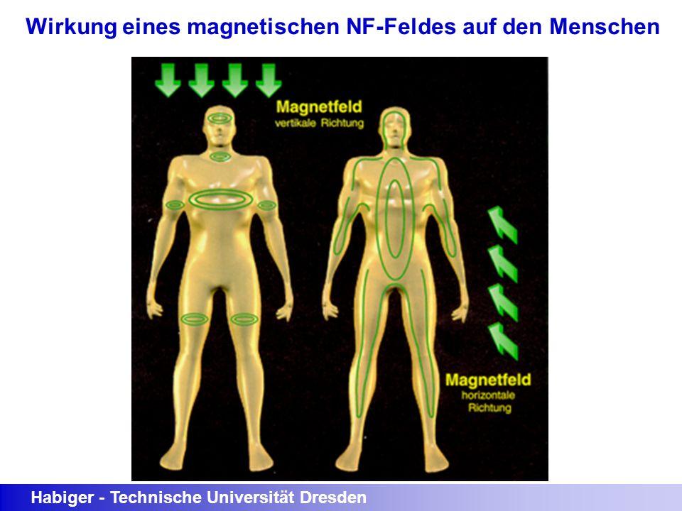 Habiger - Technische Universität Dresden Wirkung eines magnetischen NF-Feldes auf den Menschen