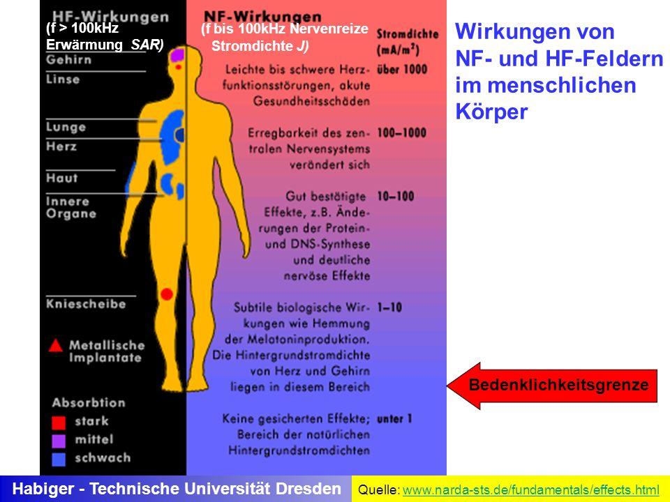 Habiger - Technische Universität Dresden Wirkungen von NF- und HF-Feldern im menschlichen Körper (f bis 100kHz Nervenreize Stromdichte J) (f > 100kHz