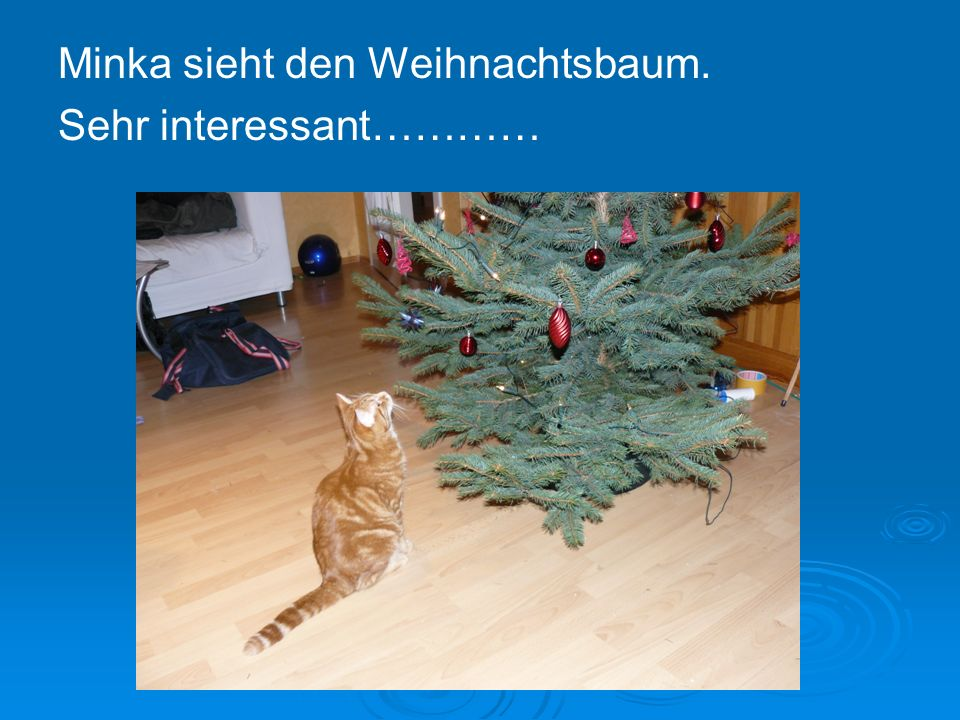 Minka sieht den Weihnachtsbaum. Sehr interessant…………