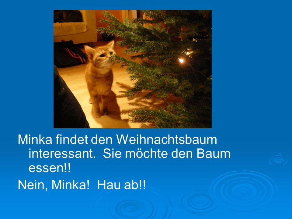 Minka findet den Weihnachtsbaum interessant. Sie möchte den Baum essen!! Nein, Minka! Hau ab!!