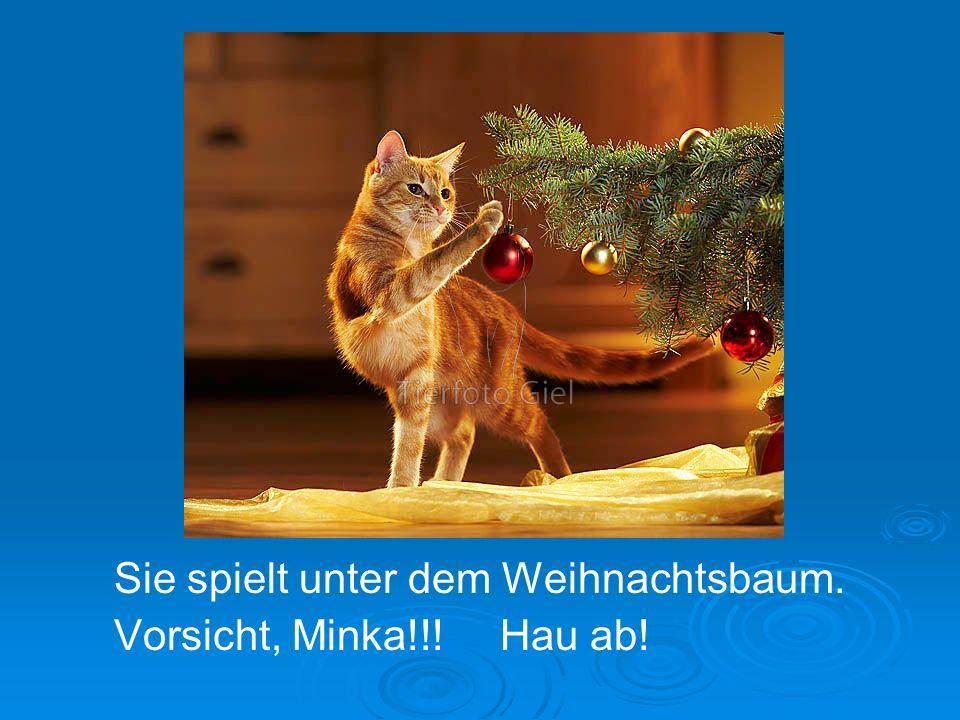 Sie spielt unter dem Weihnachtsbaum. Vorsicht, Minka!!! Hau ab!
