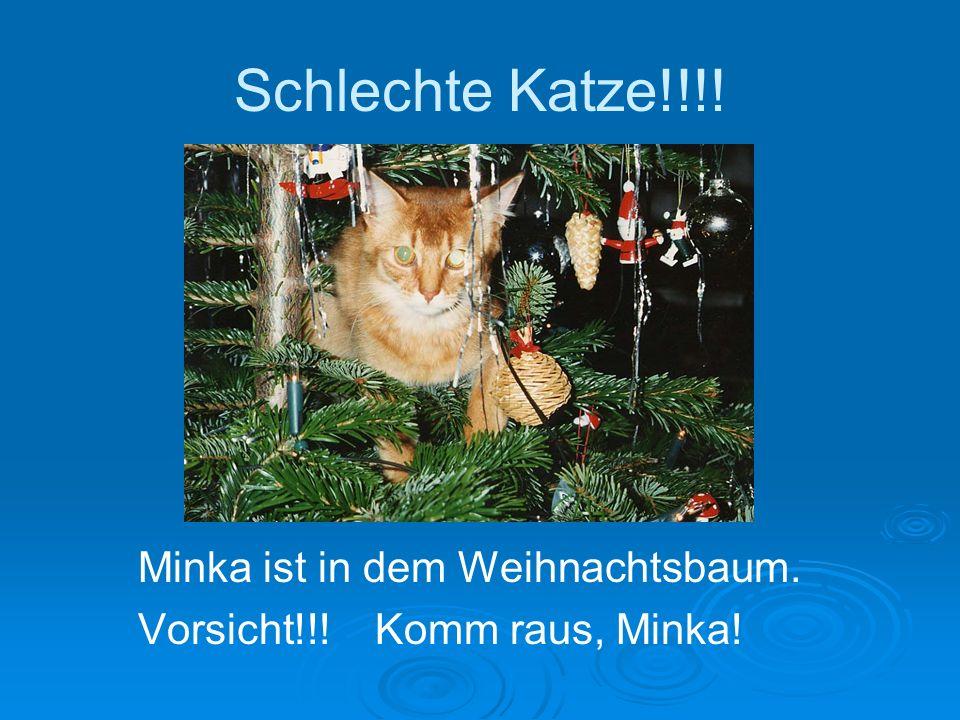 Schlechte Katze!!!! Minka ist in dem Weihnachtsbaum. Vorsicht!!! Komm raus, Minka!