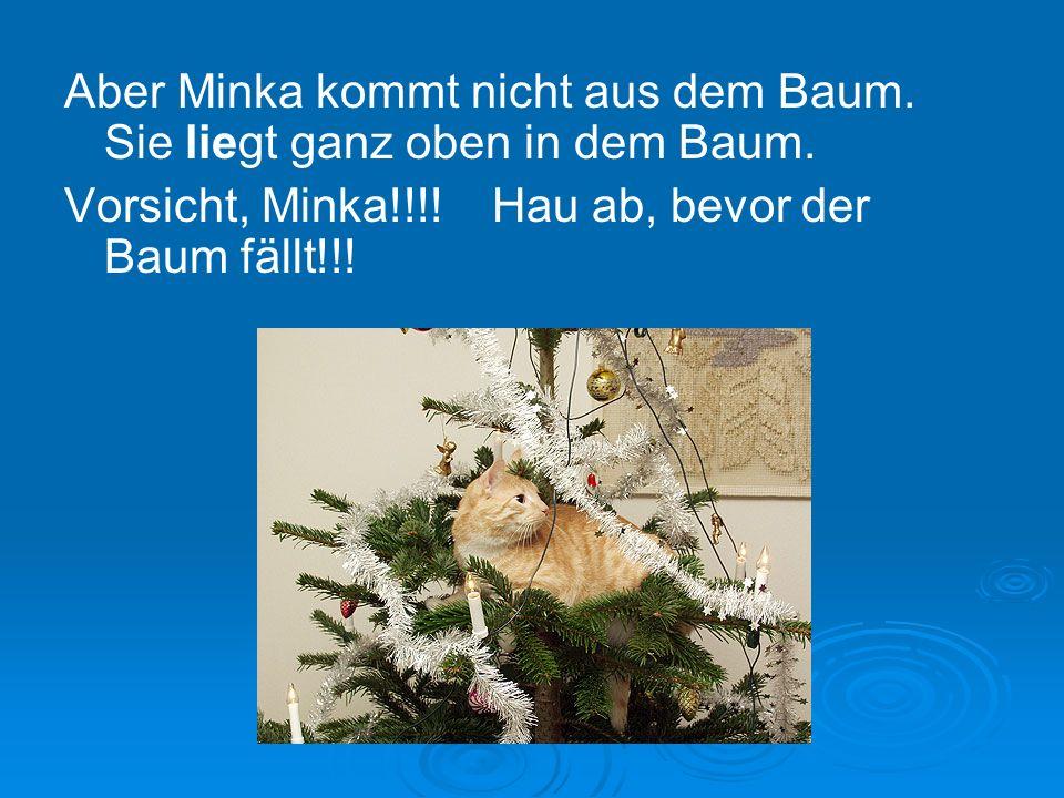 Aber Minka kommt nicht aus dem Baum. Sie liegt ganz oben in dem Baum.