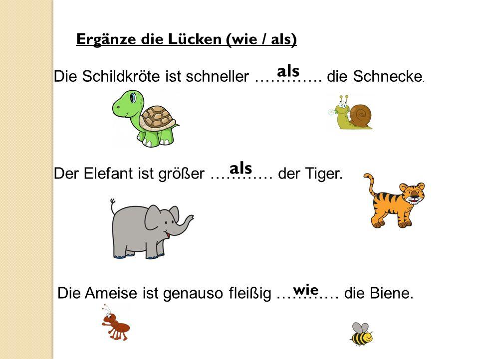 Ergänze die Lücken (wie / als) Die Schildkröte ist schneller …………. die Schnecke. als Der Elefant ist größer ………… der Tiger. als Die Ameise ist genauso