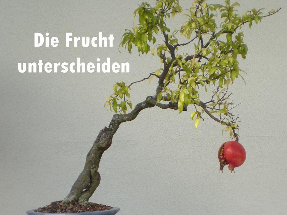 Die Frucht unterscheiden