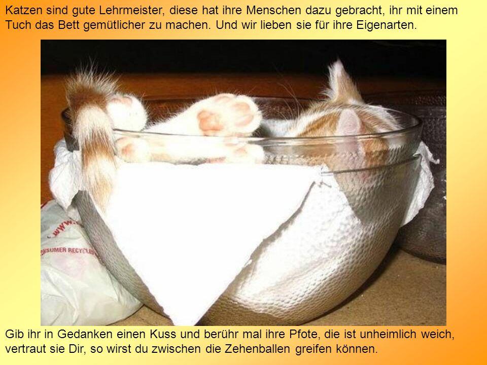 Katzen sind gute Lehrmeister, diese hat ihre Menschen dazu gebracht, ihr mit einem Tuch das Bett gemütlicher zu machen. Und wir lieben sie für ihre Ei