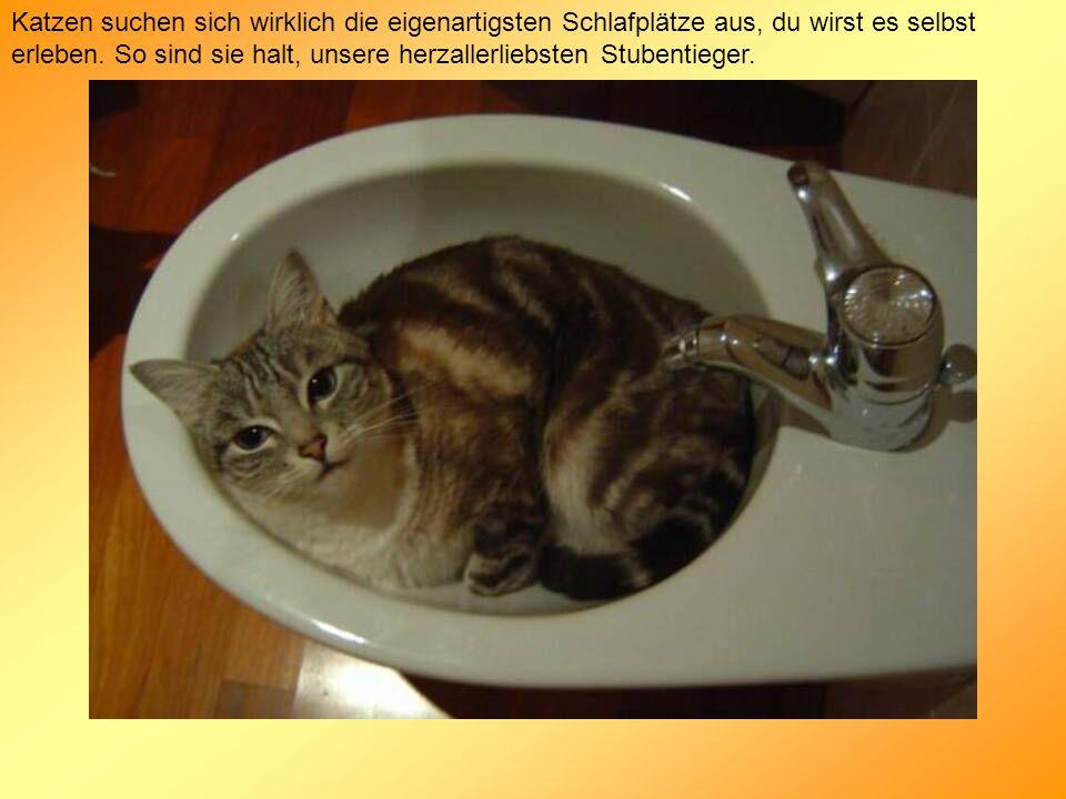 Katzen suchen sich wirklich die eigenartigsten Schlafplätze aus, du wirst es selbst erleben. So sind sie halt, unsere herzallerliebsten Stubentieger.