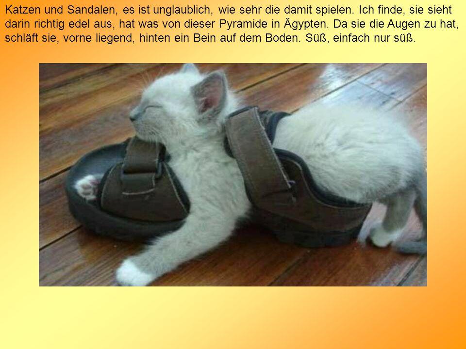 Katzen und Sandalen, es ist unglaublich, wie sehr die damit spielen. Ich finde, sie sieht darin richtig edel aus, hat was von dieser Pyramide in Ägypt