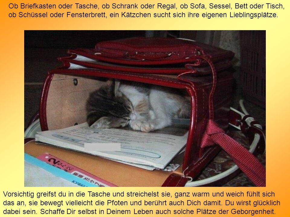 Ob Briefkasten oder Tasche, ob Schrank oder Regal, ob Sofa, Sessel, Bett oder Tisch, ob Schüssel oder Fensterbrett, ein Kätzchen sucht sich ihre eigen