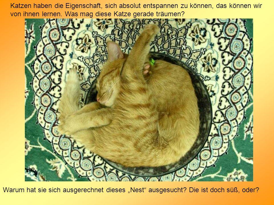 Katzen haben die Eigenschaft, sich absolut entspannen zu können, das können wir von ihnen lernen. Was mag diese Katze gerade träumen? Warum hat sie si