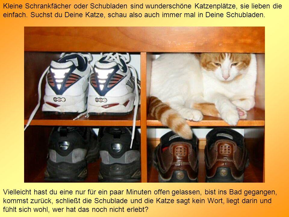 Kleine Schrankfächer oder Schubladen sind wunderschöne Katzenplätze, sie lieben die einfach. Suchst du Deine Katze, schau also auch immer mal in Deine