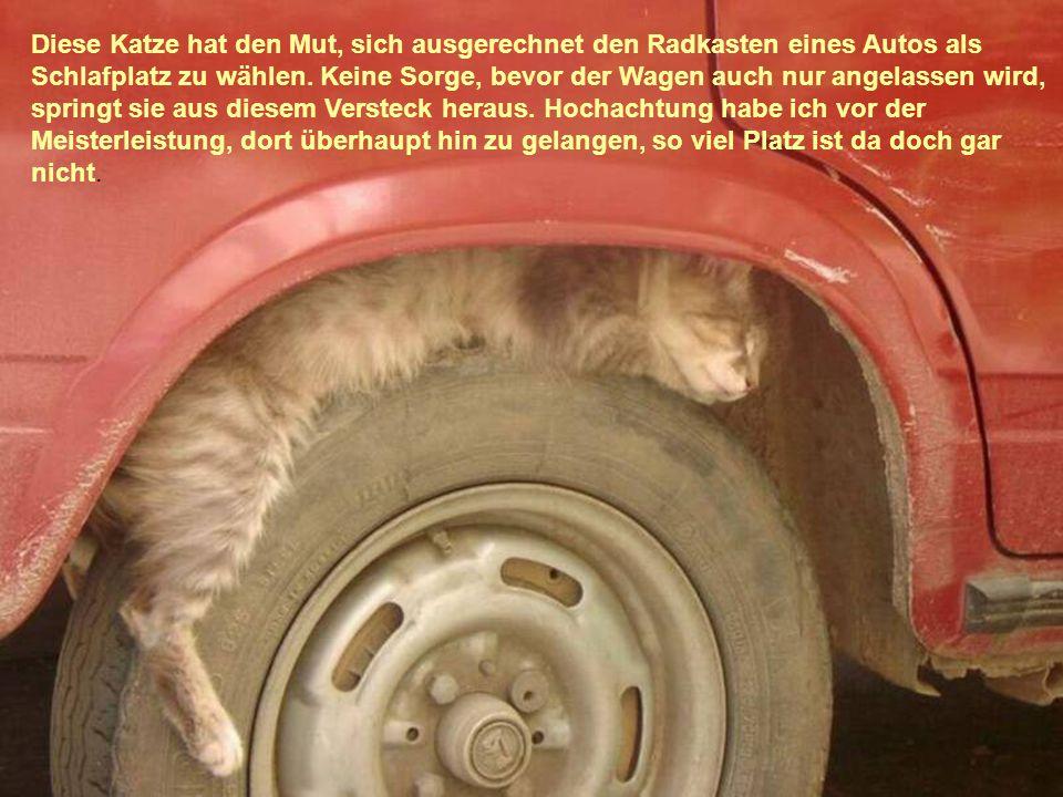 Diese Katze hat den Mut, sich ausgerechnet den Radkasten eines Autos als Schlafplatz zu wählen. Keine Sorge, bevor der Wagen auch nur angelassen wird,
