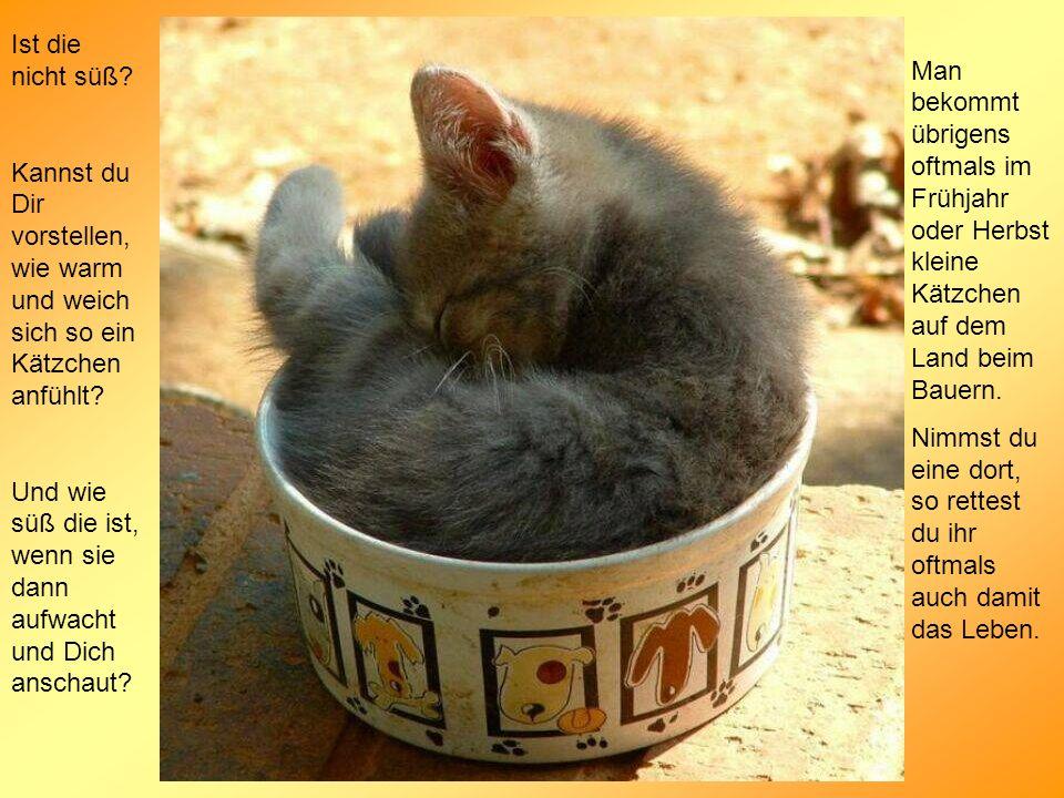 Ist die nicht süß? Kannst du Dir vorstellen, wie warm und weich sich so ein Kätzchen anfühlt? Und wie süß die ist, wenn sie dann aufwacht und Dich ans