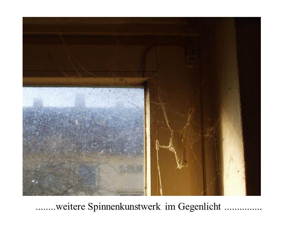 ........weitere Spinnenkunstwerk im Gegenlicht...............