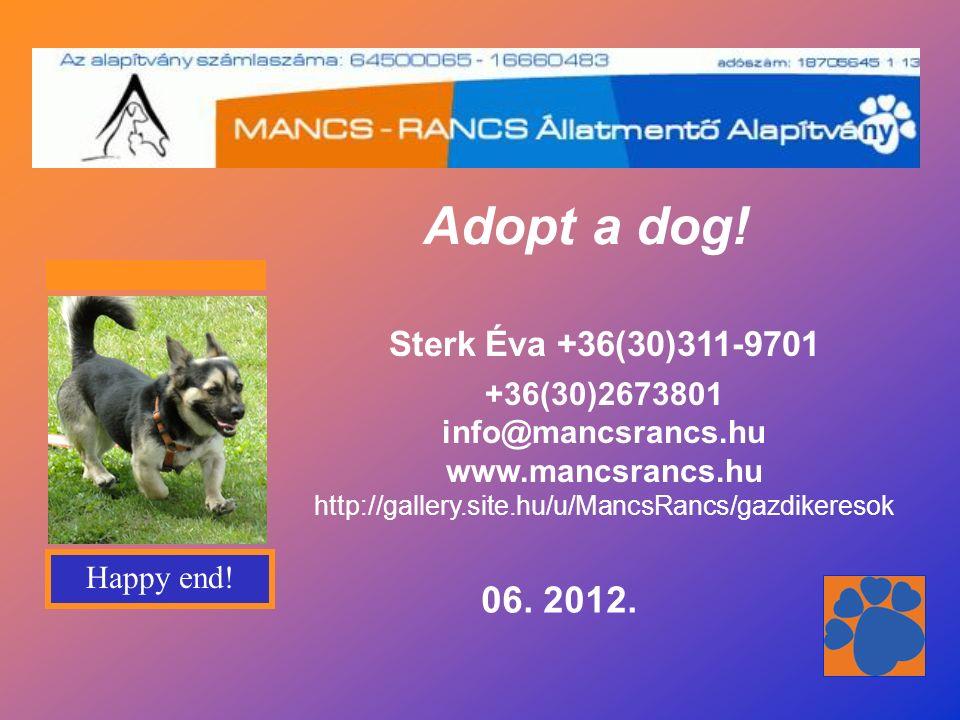 LENA ein etwa 10 Jahre alter Deutscher Schäferhund, 56 cm, 26 kg, wurde früher als Wachhund bei einer Baufirma gehalten.