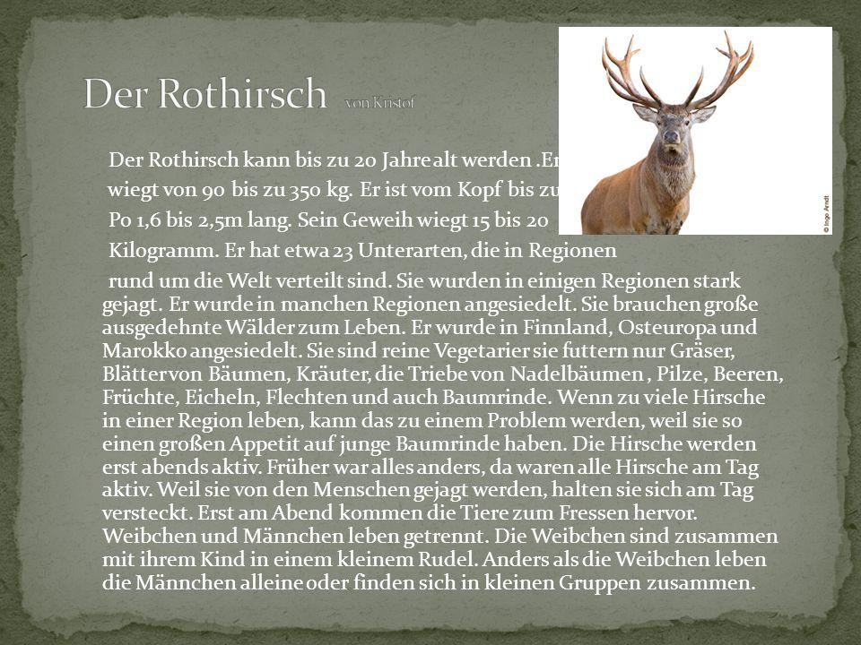 Der Rothirsch kann bis zu 20 Jahre alt werden.Er wiegt von 90 bis zu 350 kg. Er ist vom Kopf bis zum Po 1,6 bis 2,5m lang. Sein Geweih wiegt 15 bis 20