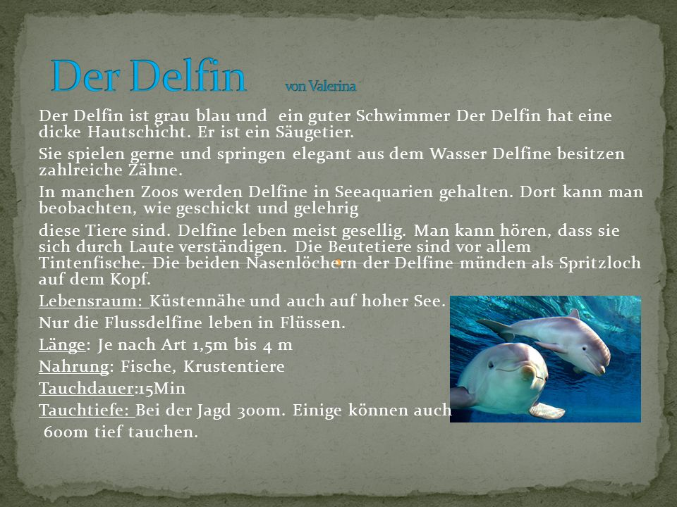 Der Delfin ist grau blau und ein guter Schwimmer Der Delfin hat eine dicke Hautschicht. Er ist ein Säugetier. Sie spielen gerne und springen elegant a
