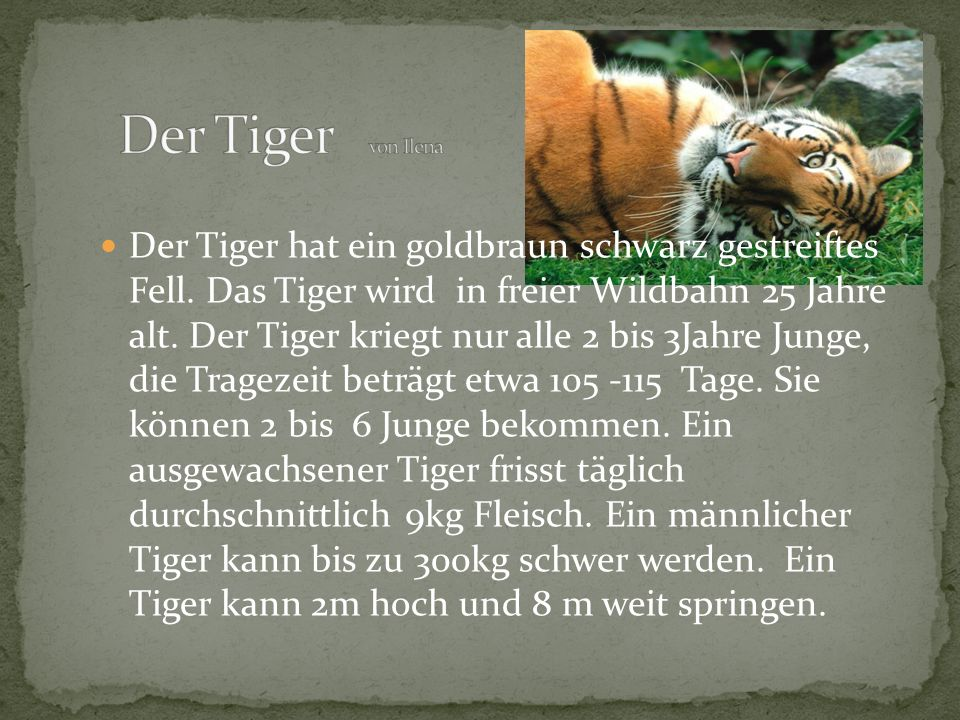 Der Tiger hat ein goldbraun schwarz gestreiftes Fell. Das Tiger wird in freier Wildbahn 25 Jahre alt. Der Tiger kriegt nur alle 2 bis 3Jahre Junge, di