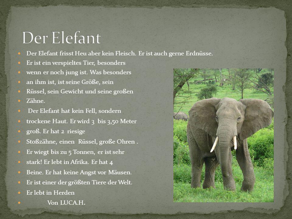 Der Elefant frisst Heu aber kein Fleisch. Er ist auch gerne Erdnüsse. Er ist ein verspieltes Tier, besonders wenn er noch jung ist. Was besonders an i