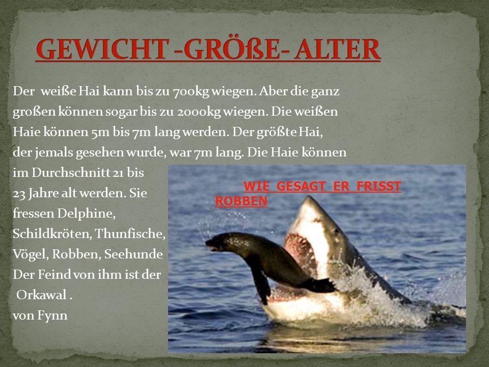 Der weiße Hai ist der gefährlichste Hai unter unseren bekannten Haiarten.