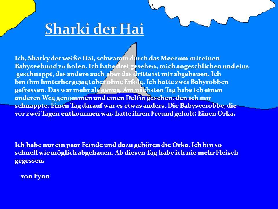 Ich, Sharky der weiße Hai, schwamm durch das Meer um mir einen Babyseehund zu holen. Ich habe drei gesehen, mich angeschlichen und eins geschnappt, da