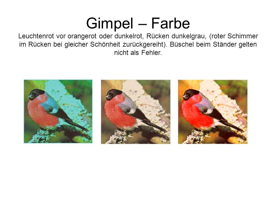 Gimpel – Farbe Leuchtenrot vor orangerot oder dunkelrot, Rücken dunkelgrau, (roter Schimmer im Rücken bei gleicher Schönheit zurückgereiht). Büschel b