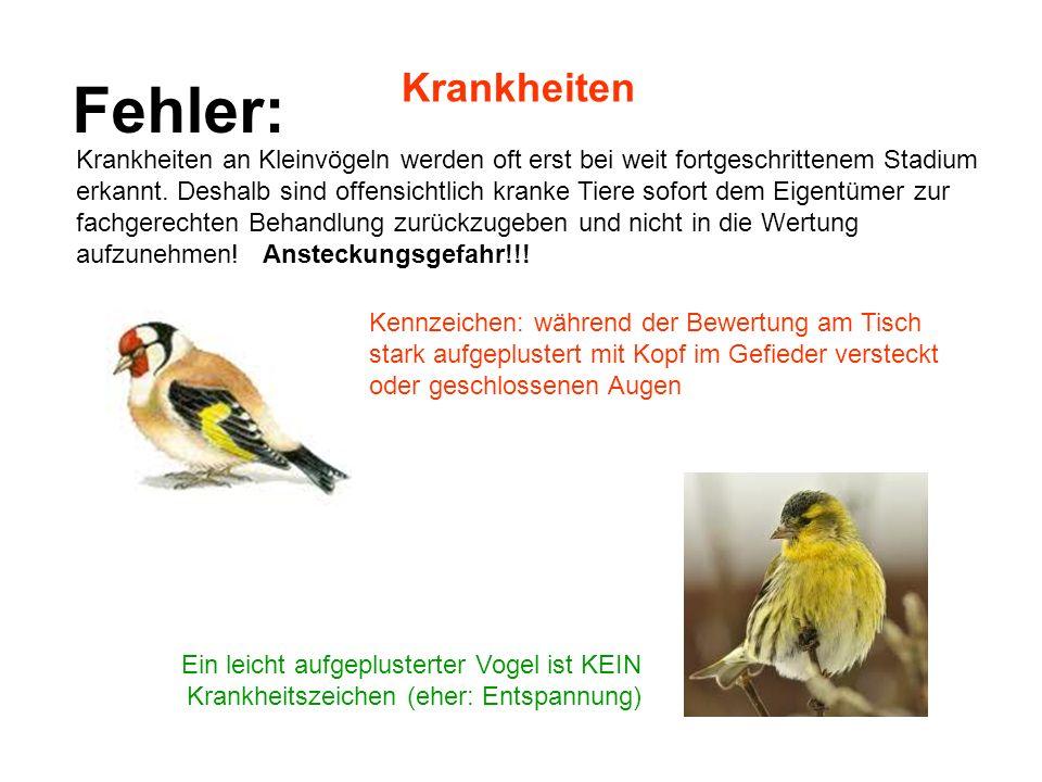 Krankheiten Ein leicht aufgeplusterter Vogel ist KEIN Krankheitszeichen (eher: Entspannung) Krankheiten an Kleinvögeln werden oft erst bei weit fortge