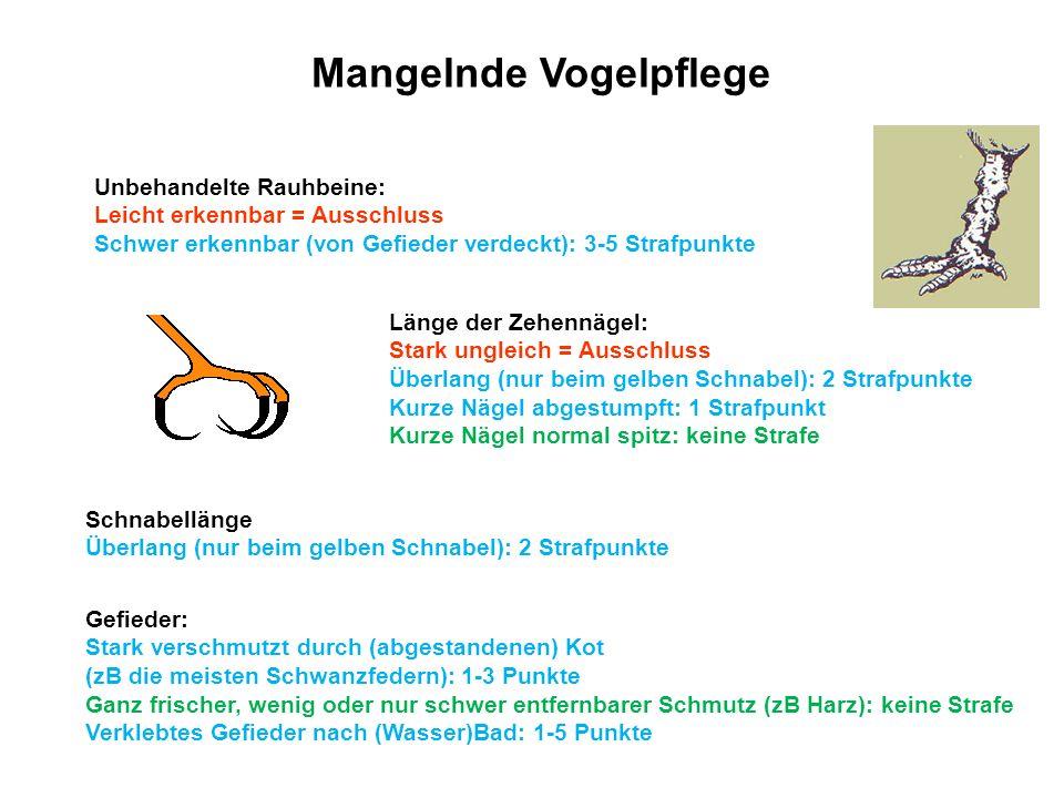 Mangelnde Vogelpflege Unbehandelte Rauhbeine: Leicht erkennbar = Ausschluss Schwer erkennbar (von Gefieder verdeckt): 3-5 Strafpunkte Länge der Zehenn