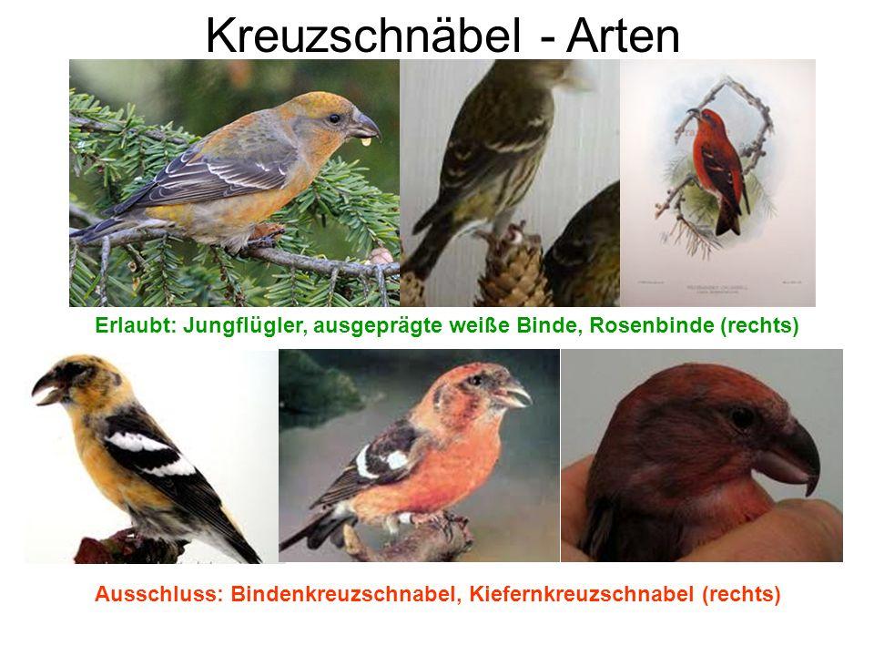 Kreuzschnäbel - Arten Erlaubt: Jungflügler, ausgeprägte weiße Binde, Rosenbinde (rechts) Ausschluss: Bindenkreuzschnabel, Kiefernkreuzschnabel (rechts