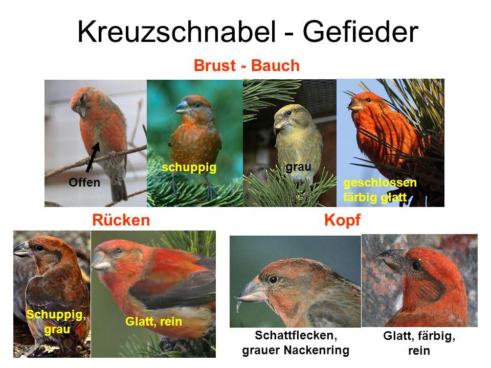 Alte Vögel Kennzeichen für alte Vögel: Helle, glasige Ständer Zu lange Krallen Zu langer Schnabel Sehr heller Schnabel (Stieglitz, Zeisig) Gefiederfarbe weniger ausgeprägt (tw.