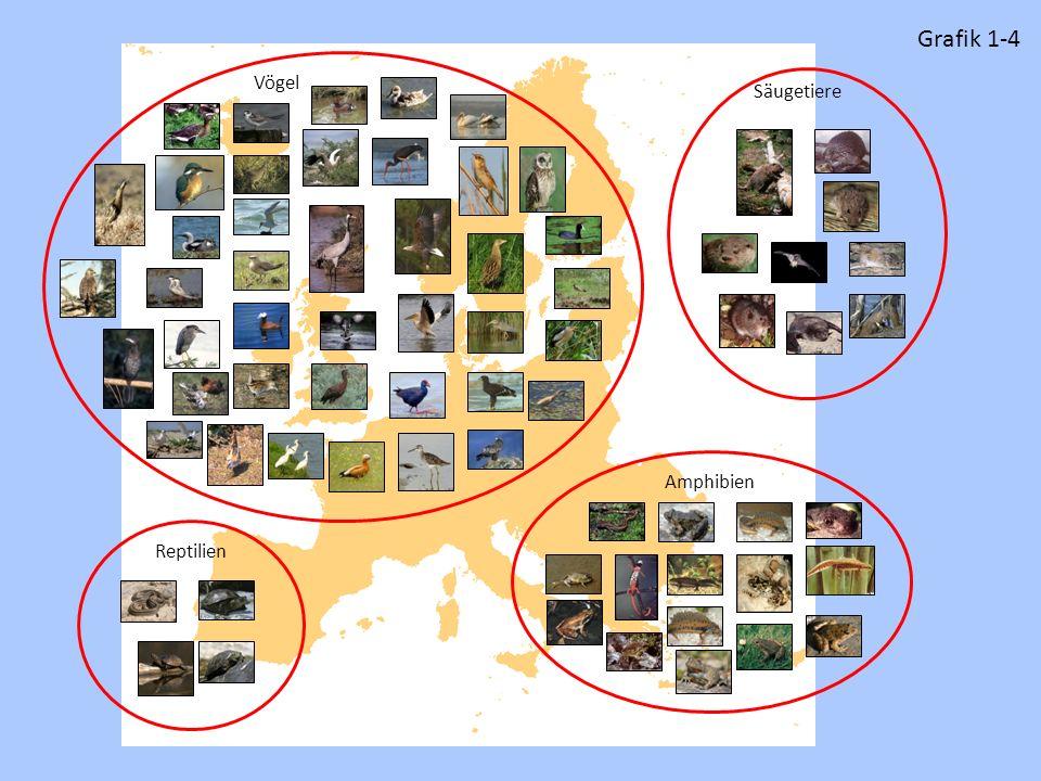 Reptilien Säugetiere VögelAmphibien Grafik 1-4