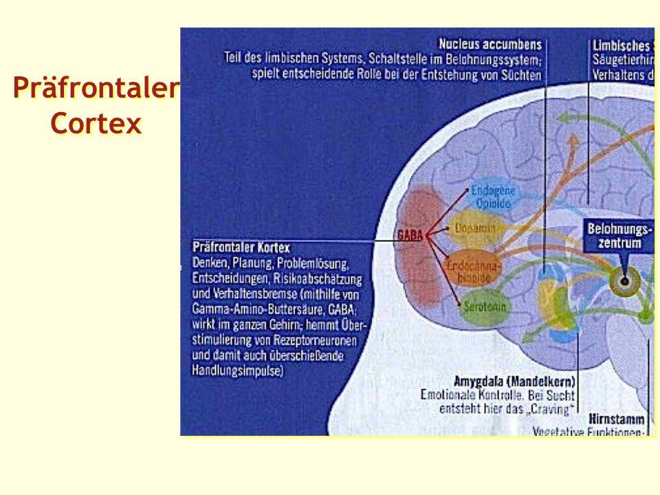 Präfrontaler Cortex