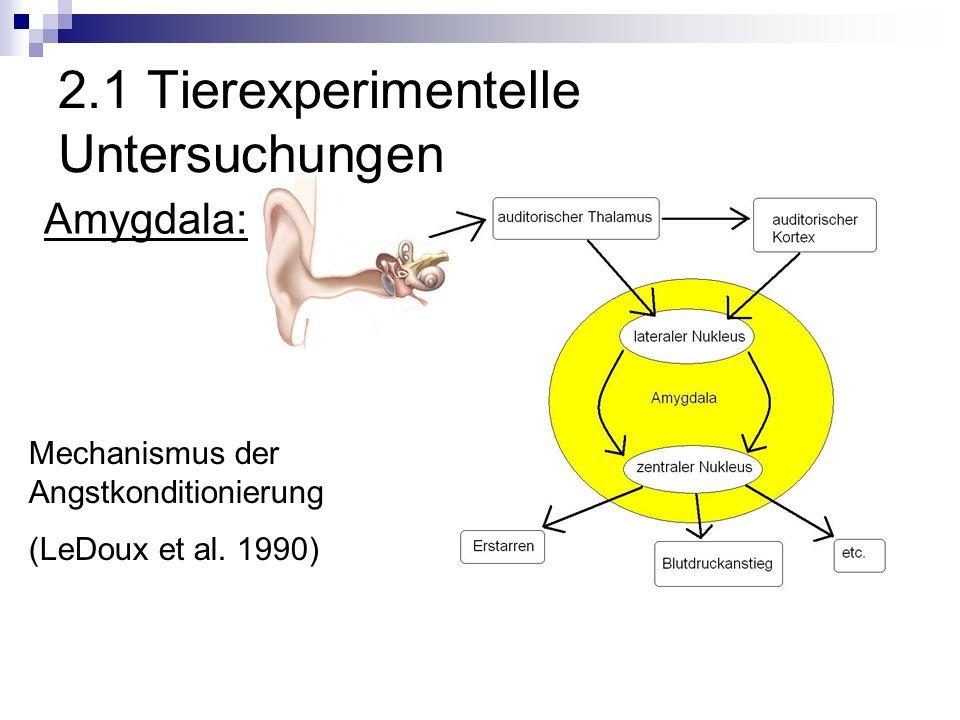 2.1 Tierexperimentelle Untersuchungen Amygdala: Mechanismus der Angstkonditionierung (LeDoux et al.