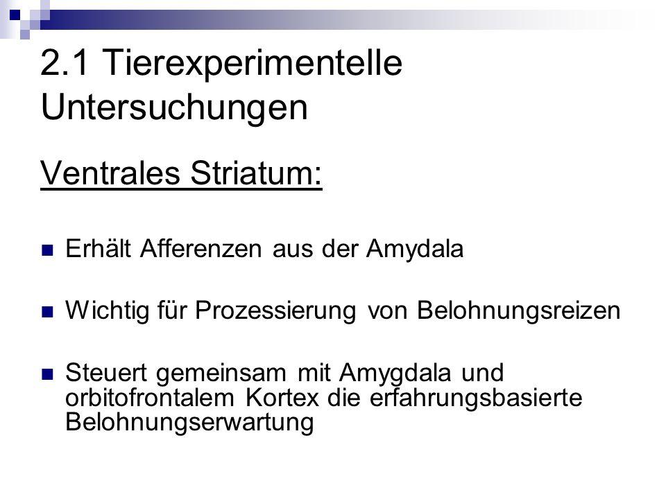 2.1 Tierexperimentelle Untersuchungen Ventrales Striatum: Erhält Afferenzen aus der Amydala Wichtig für Prozessierung von Belohnungsreizen Steuert gemeinsam mit Amygdala und orbitofrontalem Kortex die erfahrungsbasierte Belohnungserwartung