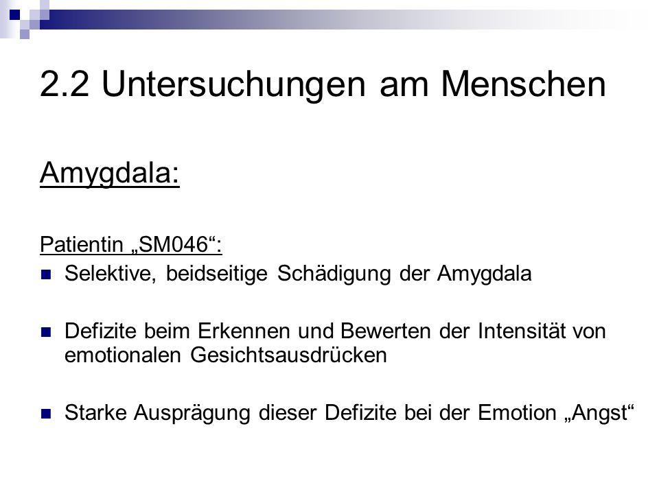 2.2 Untersuchungen am Menschen Amygdala: Patientin SM046: Selektive, beidseitige Schädigung der Amygdala Defizite beim Erkennen und Bewerten der Intensität von emotionalen Gesichtsausdrücken Starke Ausprägung dieser Defizite bei der Emotion Angst