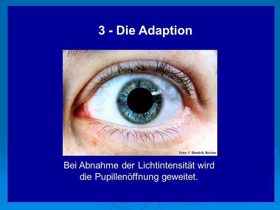 3 - Die Adaption Bei Abnahme der Lichtintensität wird die Pupillenöffnung geweitet.
