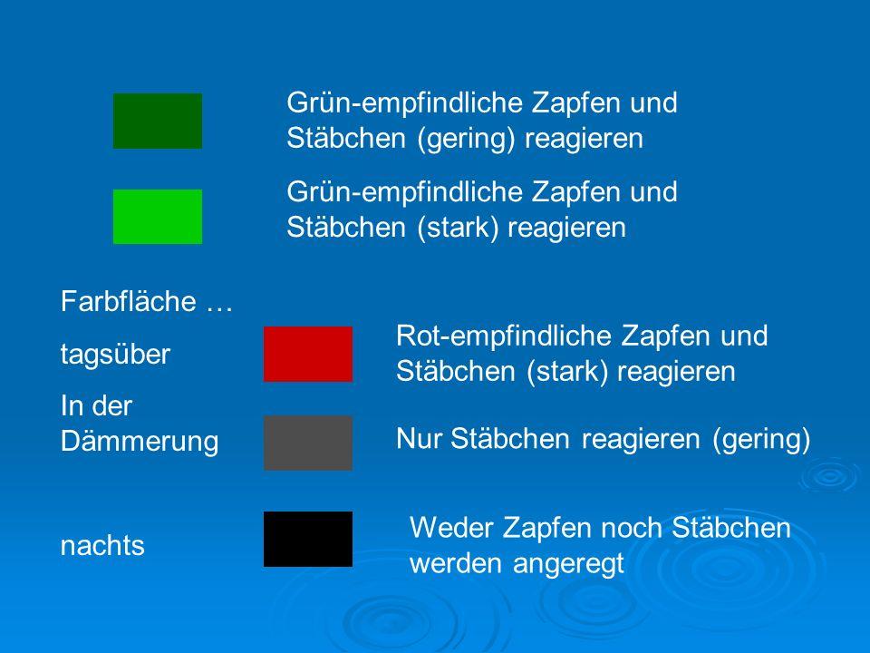 Grün-empfindliche Zapfen und Stäbchen (gering) reagieren Grün-empfindliche Zapfen und Stäbchen (stark) reagieren Rot-empfindliche Zapfen und Stäbchen (stark) reagieren Nur Stäbchen reagieren (gering) Weder Zapfen noch Stäbchen werden angeregt Farbfläche … tagsüber In der Dämmerung nachts