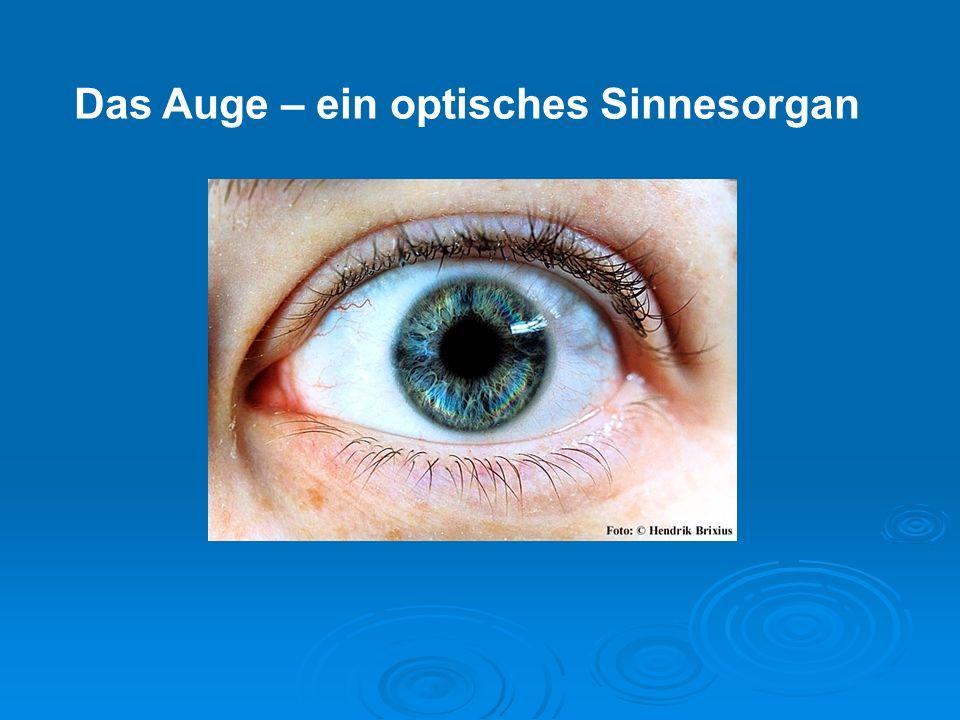 1 - Der Aufbau des Auges Weisse AugenhautDurchsichtige HornhautBindehaut mit Blutgefässen Öffnung im Apfel, die PupilleDie Iris, ein verstellbarer Ring (Blende) Die Netzhaut, Ort des Sehens Die Linse, bricht das Licht Kristall- körper Seh- nerv