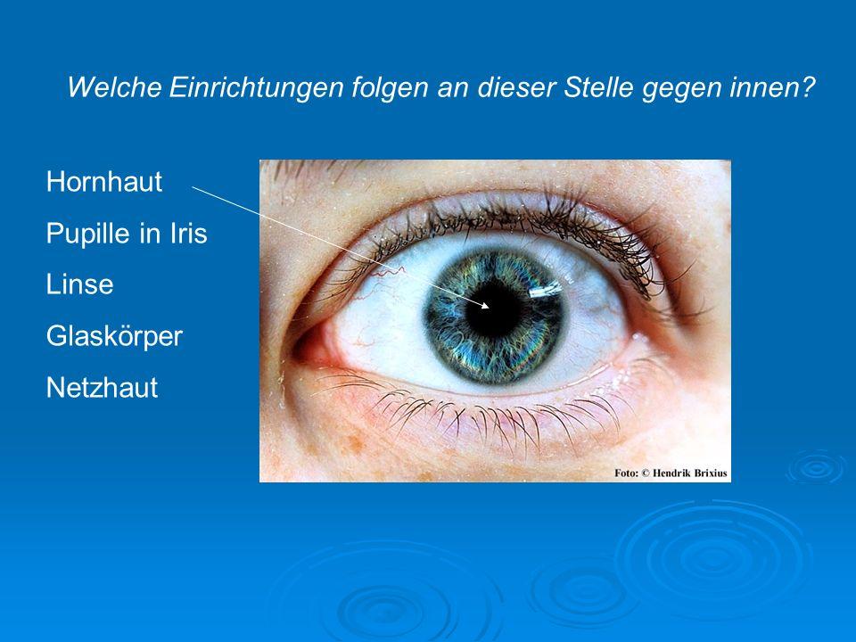 Linsen- Variationen Auch Kontakt- linsen sind Linsen 8 - Sehfehler - Linsen