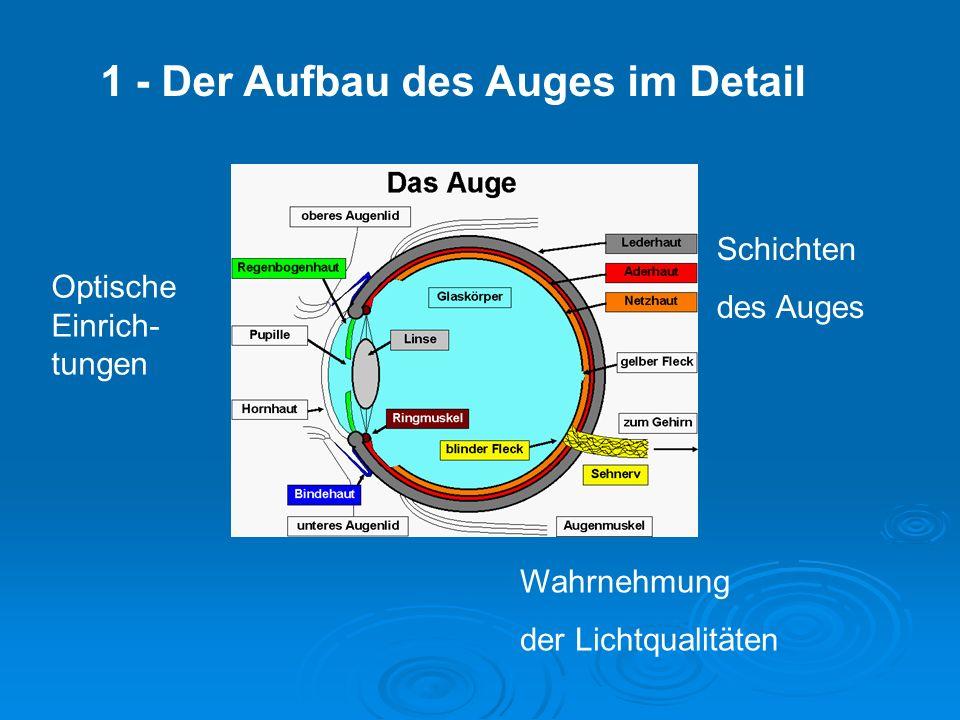 1 - Der Aufbau des Auges im Detail Optische Einrich- tungen Schichten des Auges Wahrnehmung der Lichtqualitäten
