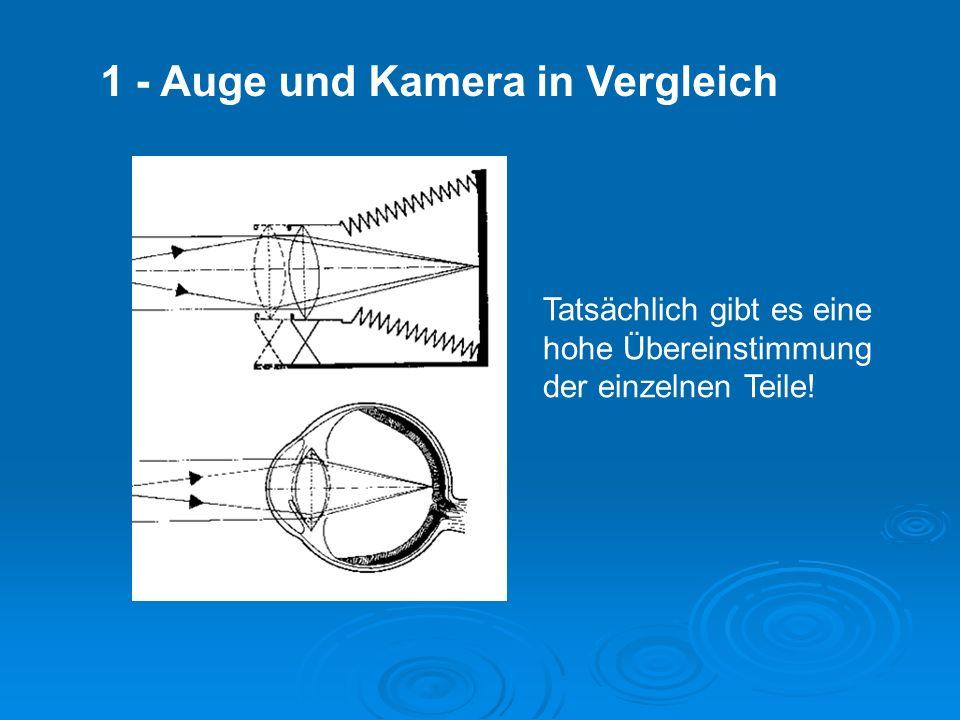 1 - Auge und Kamera in Vergleich Tatsächlich gibt es eine hohe Übereinstimmung der einzelnen Teile!
