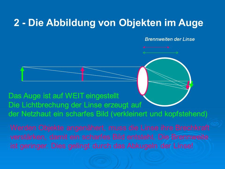 Linientäuschungen Die Querstriche verleiten uns anzunehmen, dass die langen Linien nicht parallel sind … sie sind es natürlich schon!